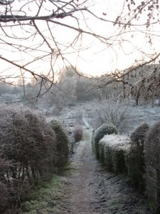 Path through the St Margaret's allotments