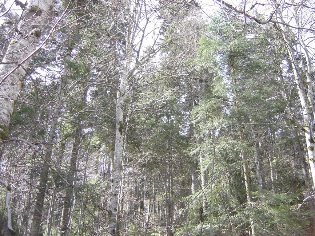Padure in aprilie (Sinaia, 2018)