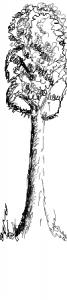 2016_06_13_tree_pencil_long_side