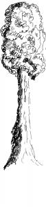 2016_06_13_tree_pencil_long_side1