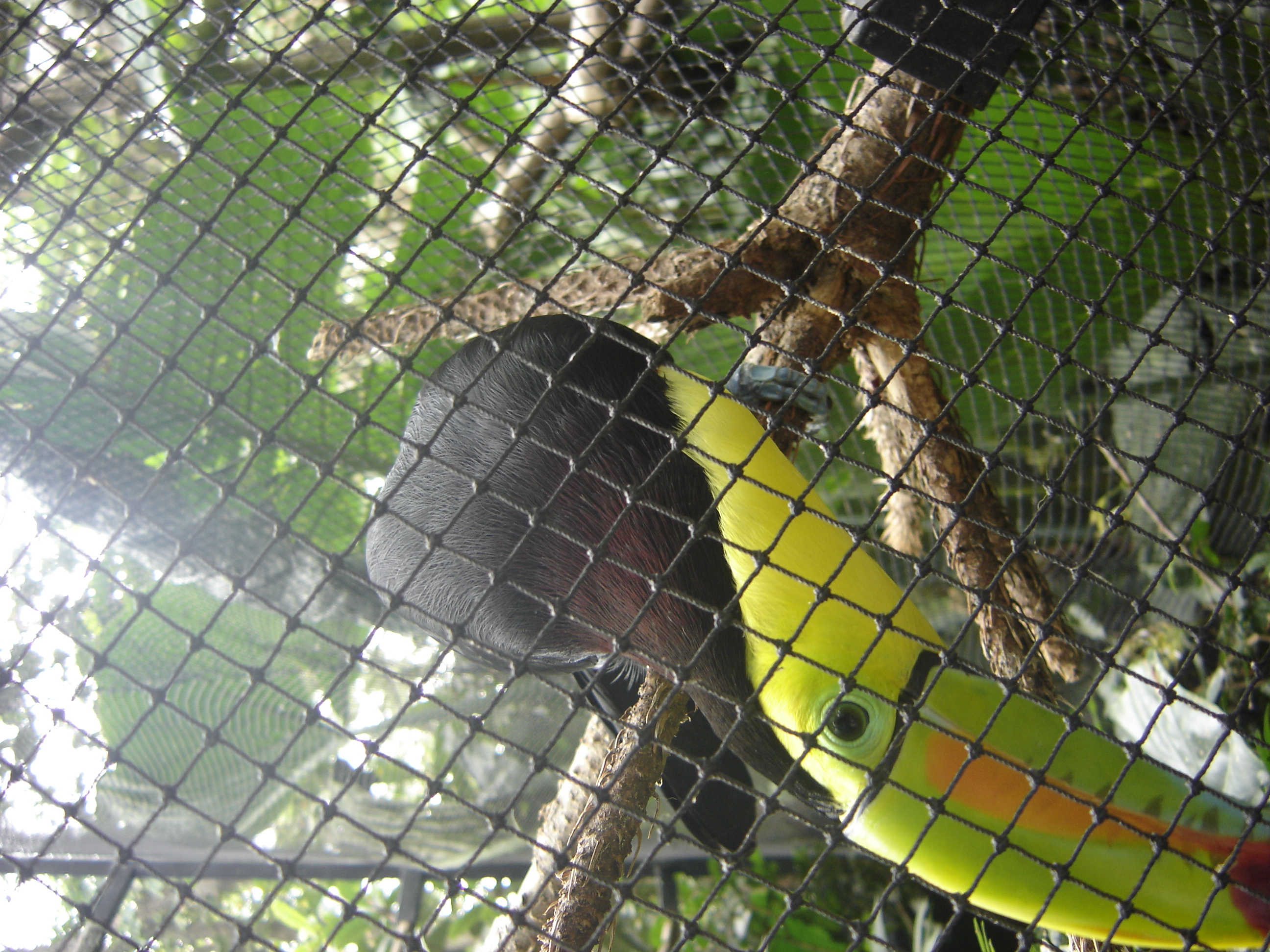 A very curious Toucan bird saying hi.