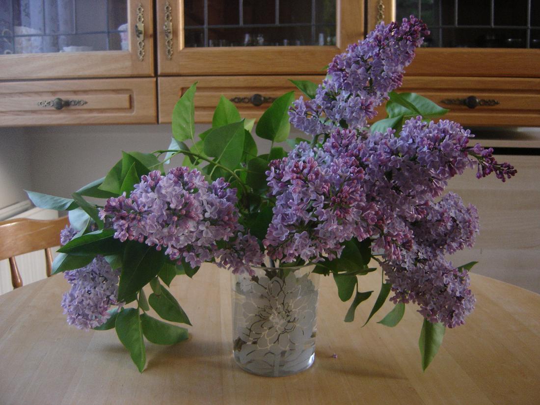 Liliac mov in vaza