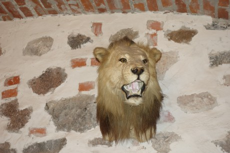 How did the lion go through the wall?